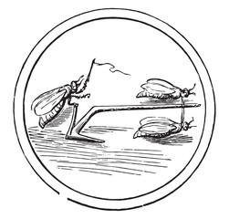 Primitive plow, to after an ancient coin, vintage engraving.