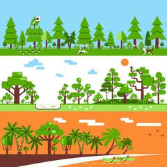 Coniferous Deciduous Tropical Forest Banners