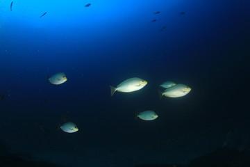 Fish underwater sea ocean