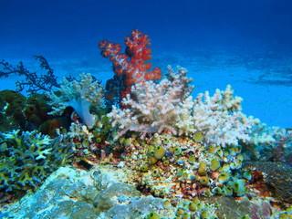 Soft coral, Island Bali