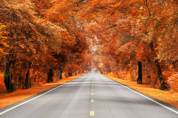 Foto op Aluminium Herfst road with yellow and red leaf, autumn scene