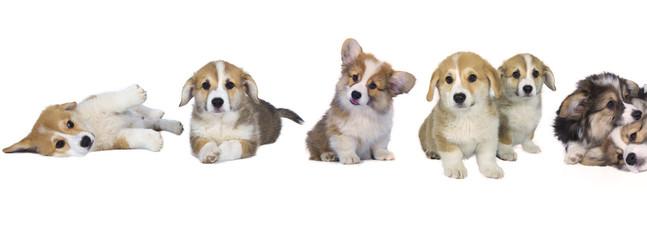 Les bébés chiens