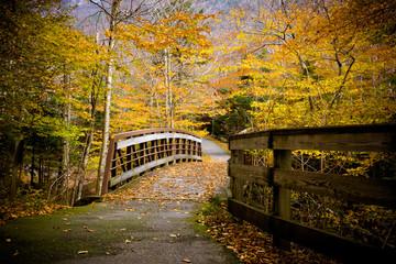 Wood Bridge and Autumn Colors