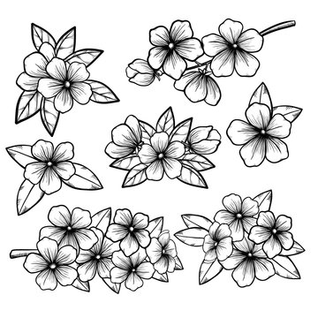 Beautiful monochrome black and white floral collection with leaves and flowers.