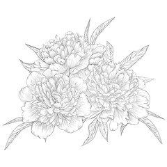 beautiful monochrome black and white bouquet peony isolated on background. Hand-drawn contour line.