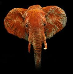 elephants in Tsavo Park