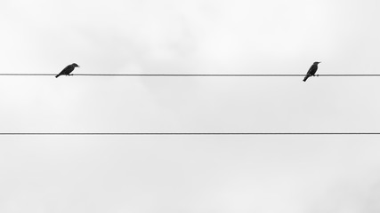 Two birds on the wire  of electricity