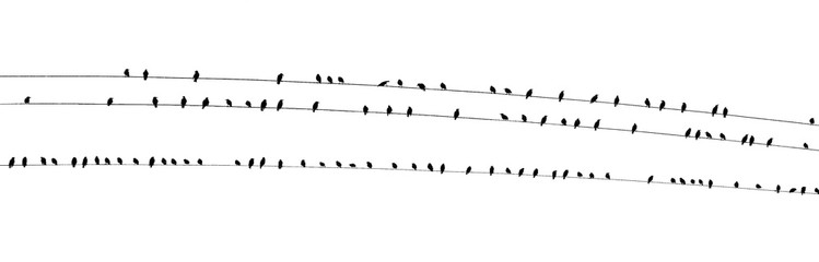 Birds on a wire wide PDK