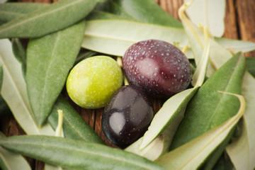 Fototapete - Tre olive tra foglie di ulivo