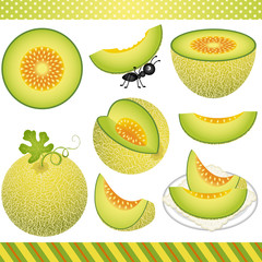 Cantaloupe Melon Digital Clipart