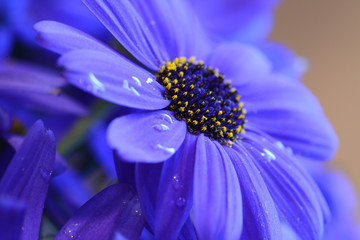 Blue Flower single