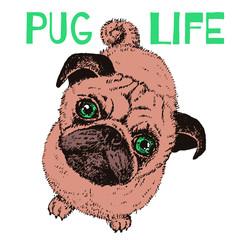 Pug Life dog, vector hand drawn sketch with cute domestic animal