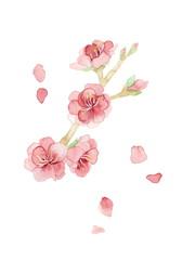 桃の花、おしべ有り