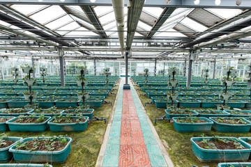 interior of vegetable greenhouse