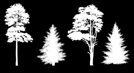 four pine and fir silhouettes isolated on black