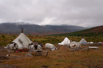 Herders' camp in the mountains of the Polar Urals. Russia.