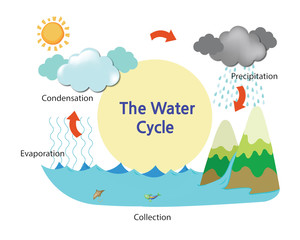 A picture describing the water cycle