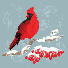 Red bird cardinal on branch with berries. Red berries under snow. Background with paint splash. Merry christmas card.