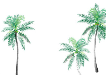 Coconut tree,palm tree isolated on white background,vector illustration ,background