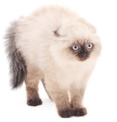 Scared white cat.