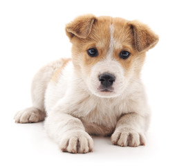 Small puppy.