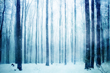 Lovely heavy snowy day in the foggy beech forest landscape. Winter season foggy beech forest scene.