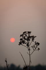 silhouette plant on a background in the evening