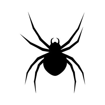 Black widow spider flat icon for apps and websites