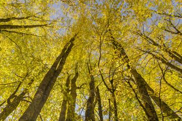 autumn  forest  , colors