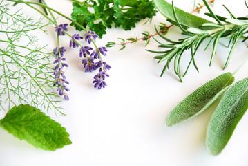 frame of herbs on white background