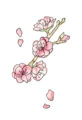 桃の花、線描
