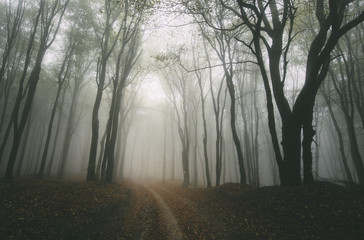 foggy autumn day in forest