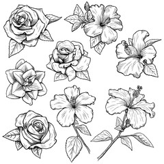 various flowers inked in BW