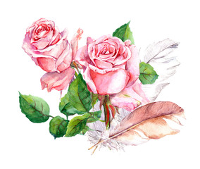 Pink rose and feathers. Watercolor