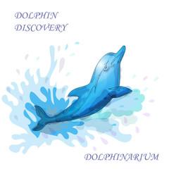 Dolphin in water blue splash