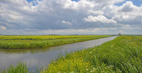 Foto op Canvas Kanaal Wild flowers along the shore of a canal in spring
