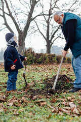 Grandfather and grandson are preparing the ground for planting f