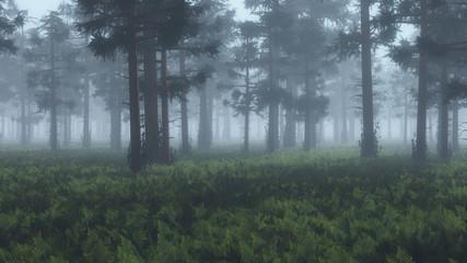 Misty pinewood with fern ground.