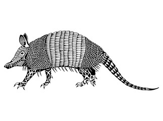 Vector Zentangle Armadillo