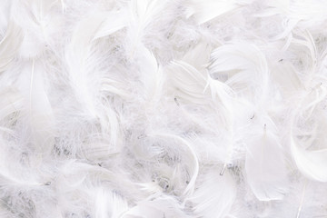 background of white feathers Wall mural