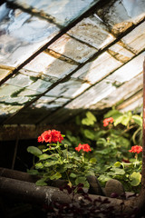 Photo greenhouses in which to grow plants
