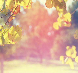 abstract background of dreamy bokeh lights, of tree at fall season