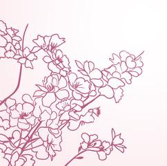 red sakura flowers anstract lines