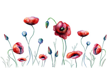 Watercolor poppy flowers