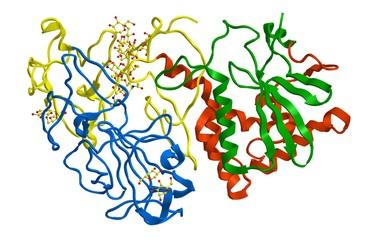 Molecular structure of ricin