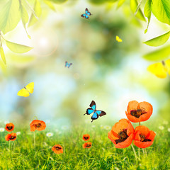 Spring or summer season abstract nature background with butterflies, green grass and leaves