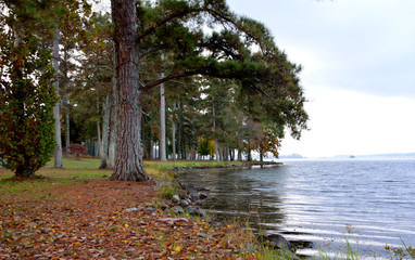 Lake Guntersville, Alabama, USA, Tennessee River.  Lakeshore at a park.