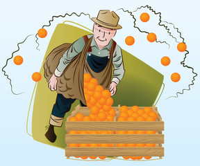 Vector stock illustration. Harvesting. A man collects oranges