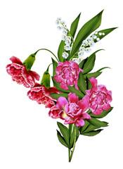 carnation isolated on white background