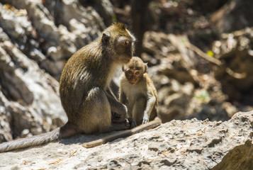 Monkey family relaxing on stones
